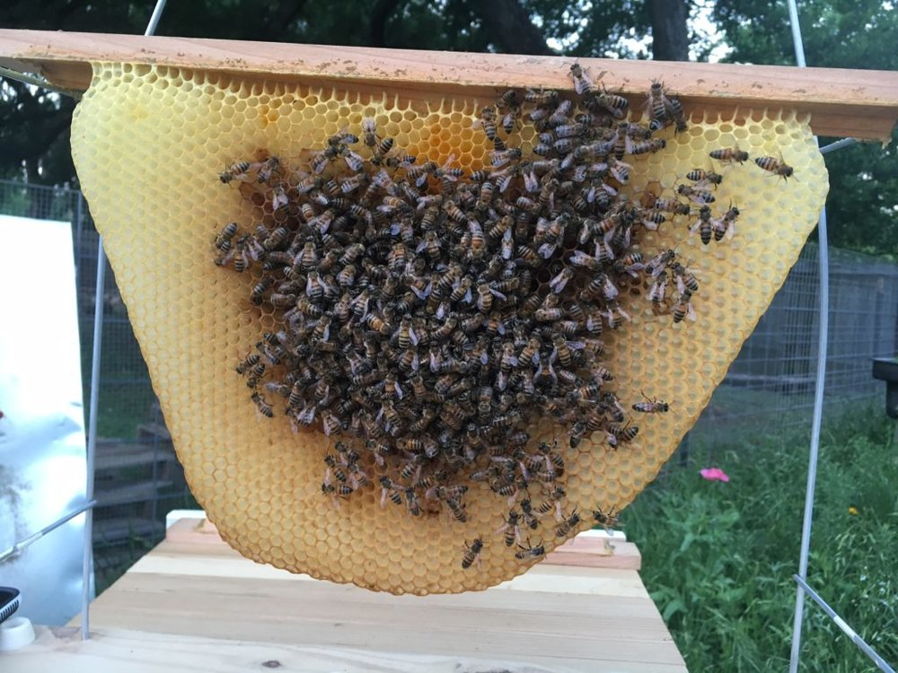 "This is our first hive. It' s traditional to name the Queen, so this one is ""Adrianne."""