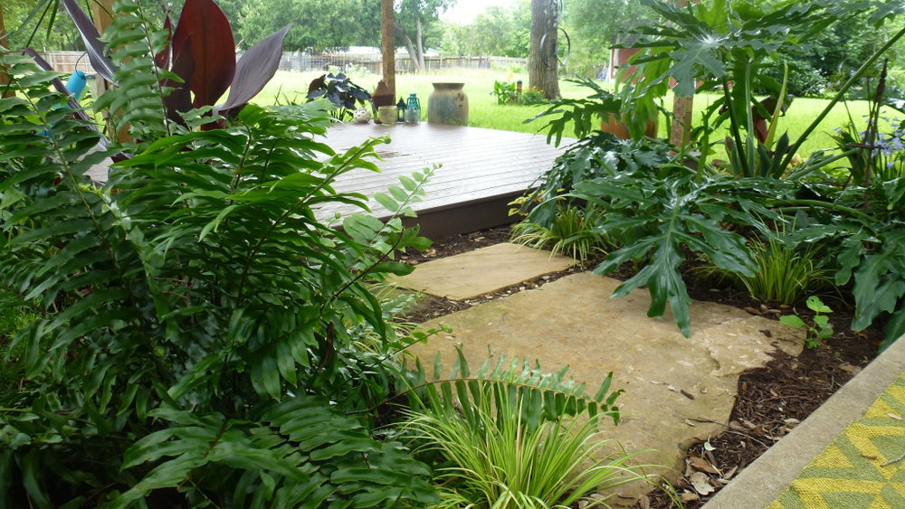 Did you know that large leaves in the garden promote wellness because they ground the space?