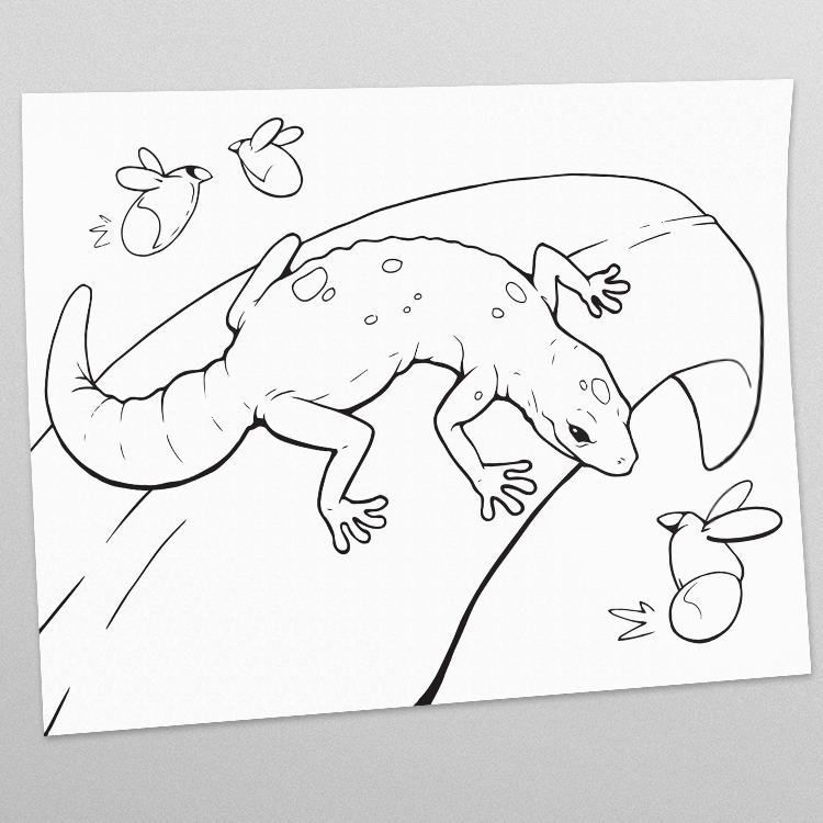 Gecko-PAGE.png