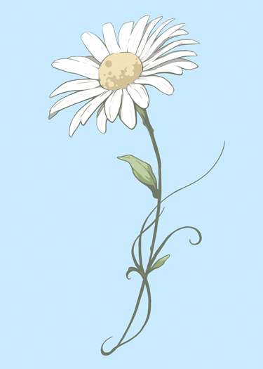Daisy-WEB.png