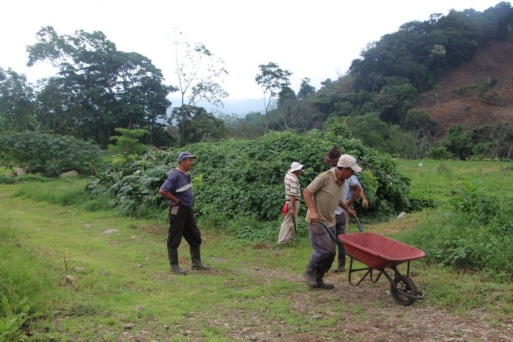 Costa_Rica_-_Nacientes_14.JPG