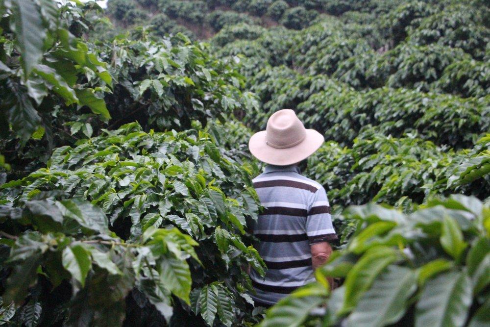 Costa_Rica_-_Nacientes_25.JPG