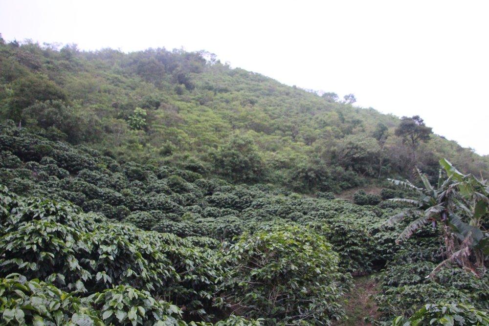 Costa_Rica_-_Nacientes_26.JPG