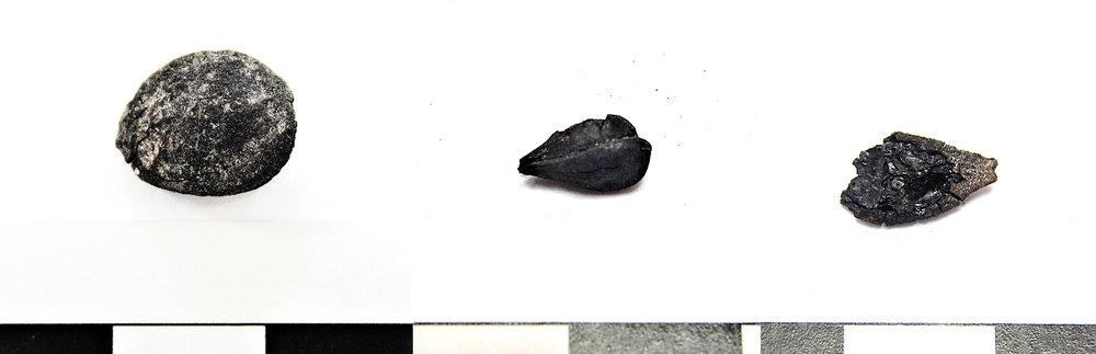 figure 3. sample of carbonized fruit seeds from feature 341. left to right: Plum (prunus domestica), apple or pear (mallus sp.), squash (cucurbita sp.). 1 cm scale.