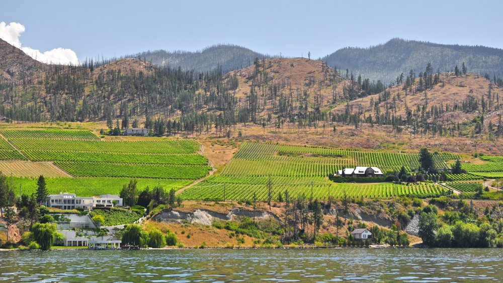 Kelowna_Vineyards_from_the_Okanagan_Lake.jpg