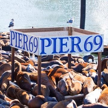 Pier69 Smaller.jpeg