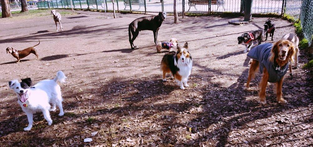 paseo de perros las condes