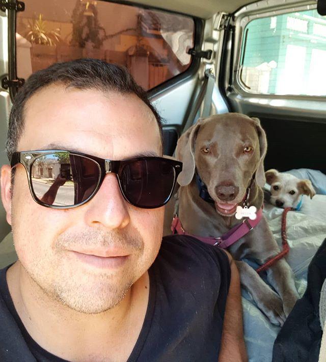 Selfie perruna con mis regalonas de providencia A Helga le encanta ir acostada en el asiento trasero y a Sarita en el de mi hija 😍🤣
