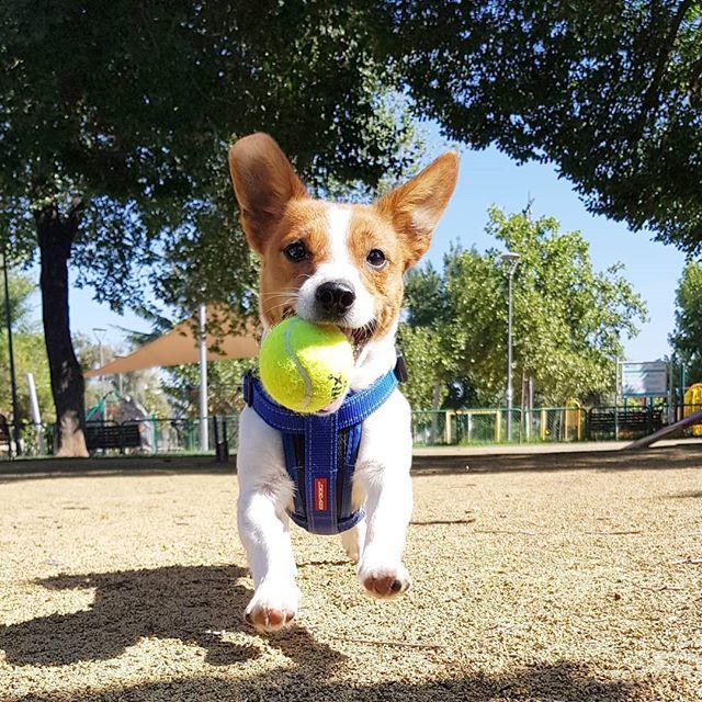 ¡Nos gusta la pelota!
