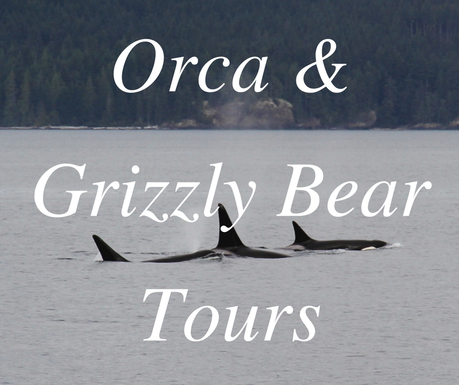 Orca & Grizzly Bear Tours - Bute Inlet and Blackfish Sound