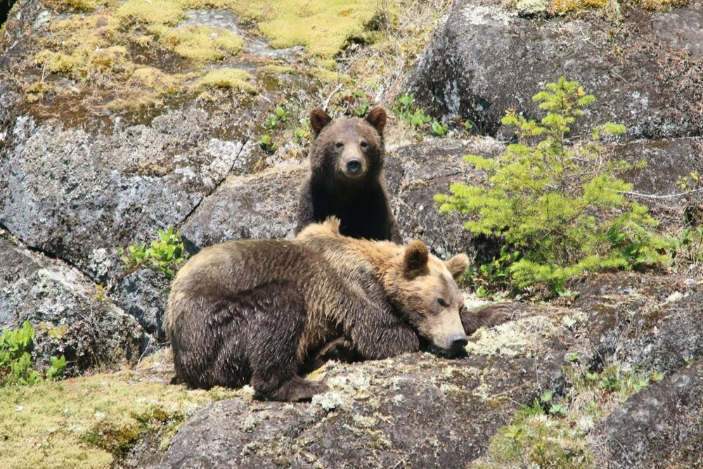 Copy of Orca & Grizzly Bear Tours - Wild Pacific Expeditions