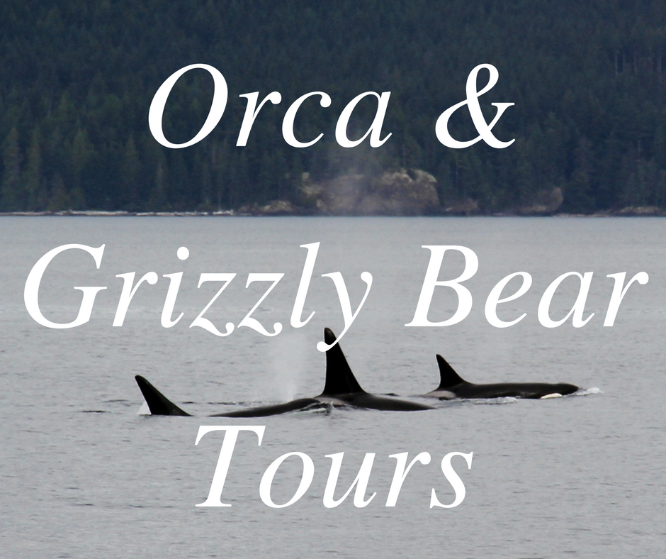 Orca & Grizzly.png