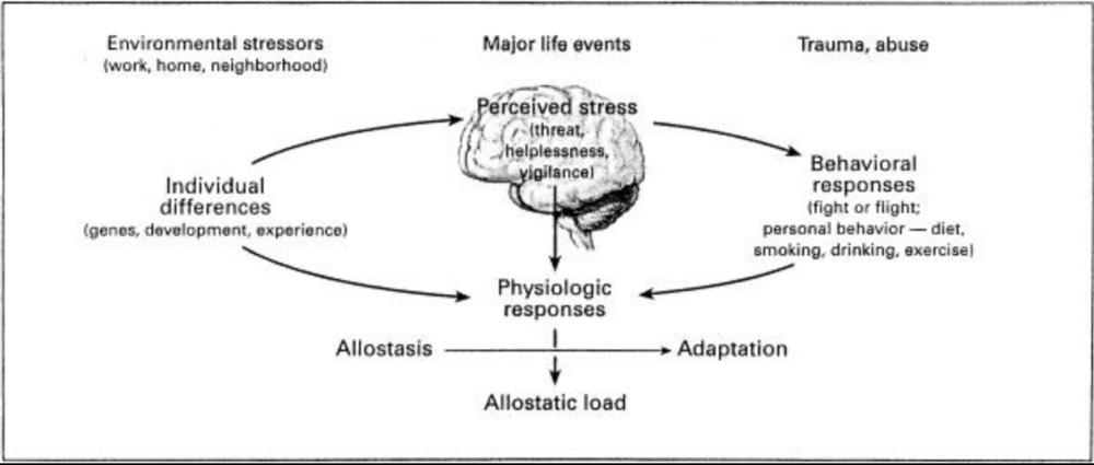 Columbus Chiropractic Allostatic Load