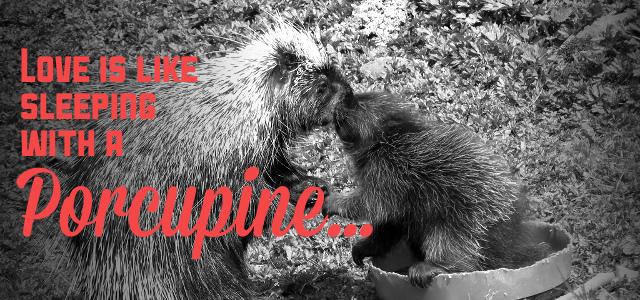 porcupine-love-1.jpg