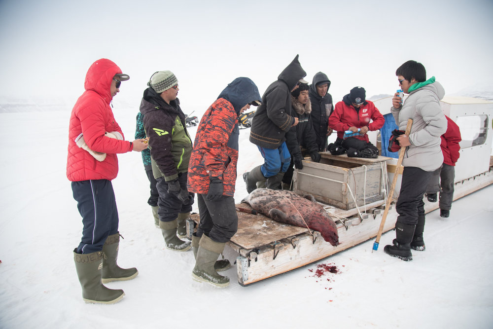 High-school boys drink juice boxes around the seal that elder Paul Ejangiaq has just caught.
