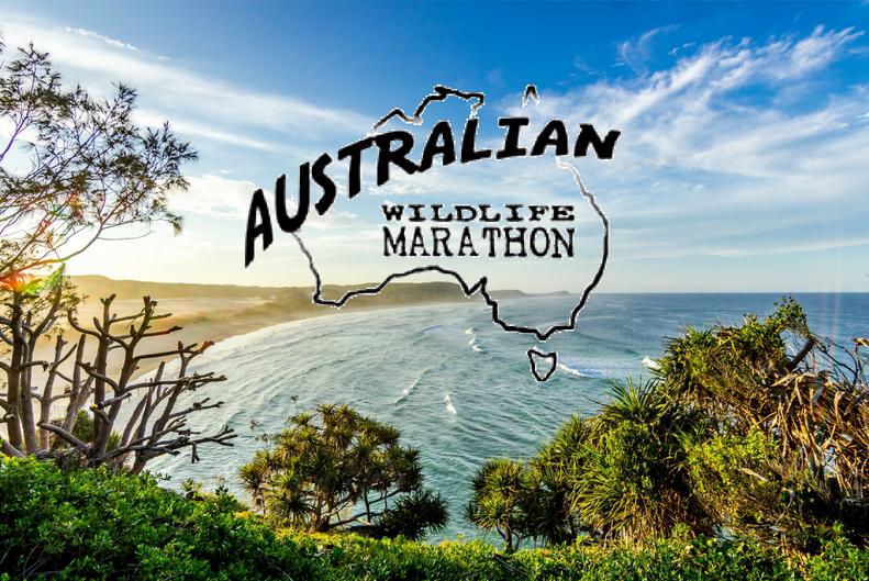 Australian wildlife marathon.png