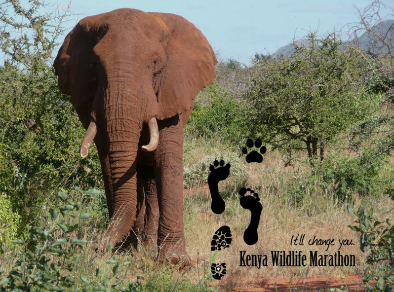 Kenya Wildlife.png