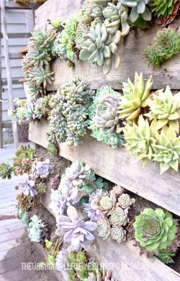 succulents-hanging succulent pallet-how to-DIY succulent garden-pallet garden