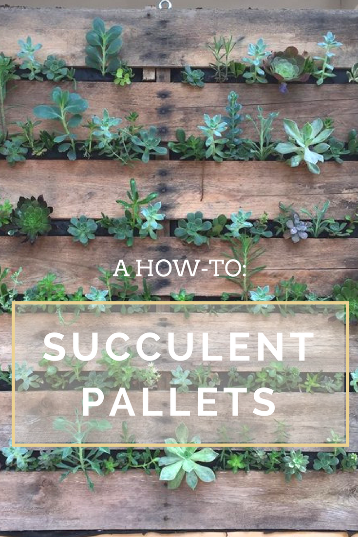 How To Make Hanging Succulent Pallets Ramble Rove