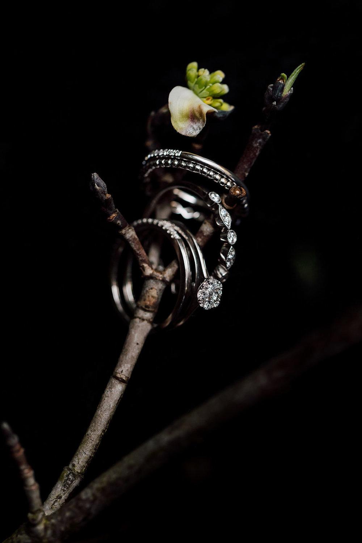 translucentpurpletree--5.jpg