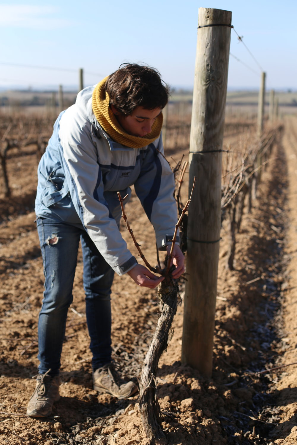 Eva from Comalats showing us the great care that goes in to cultivating her vines.