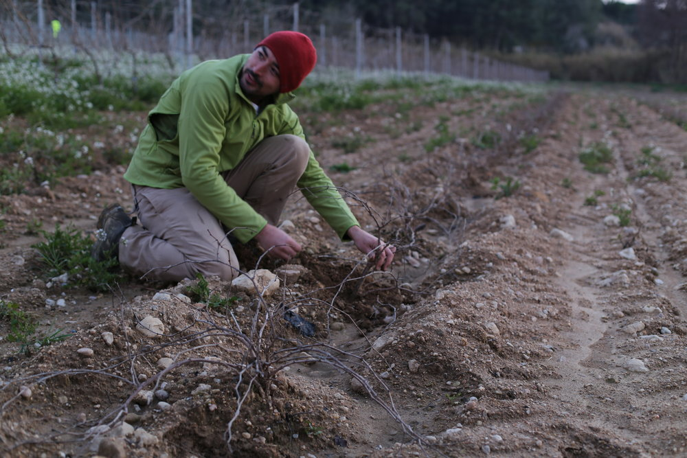 Jordi owner of Clos dels Guarans planting new vines