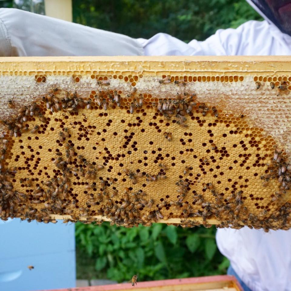 Here is a beautiful example of a brood frame, complete with honey crown from Daniel Lefebvre‎