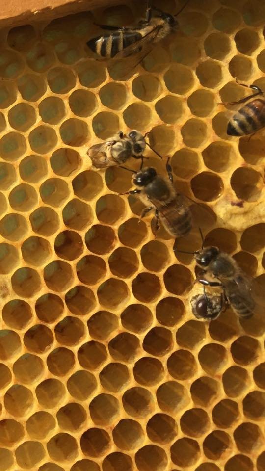 There's nothing better than bees being born!