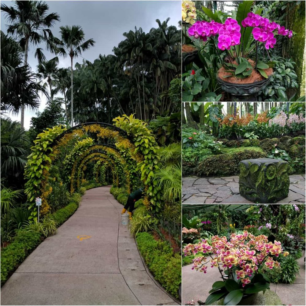Different kinds of orchids in Singapore's Botanic Gardens