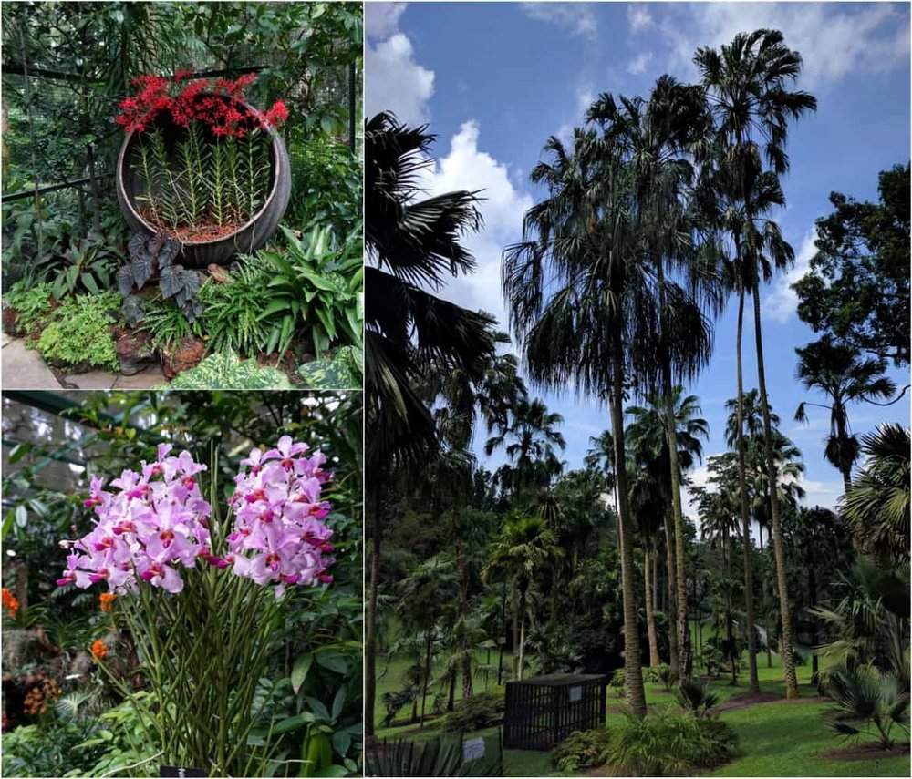 Vivid colors in Singapore's Botanic Gardens