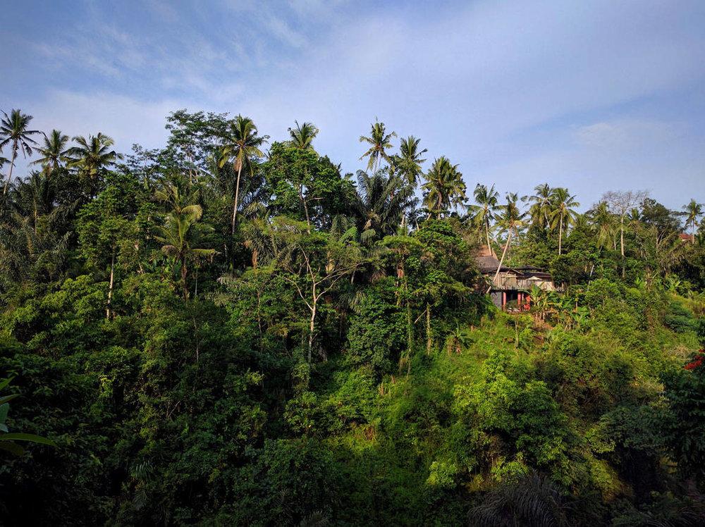 Η μπαλινέζικη ζούγκλα