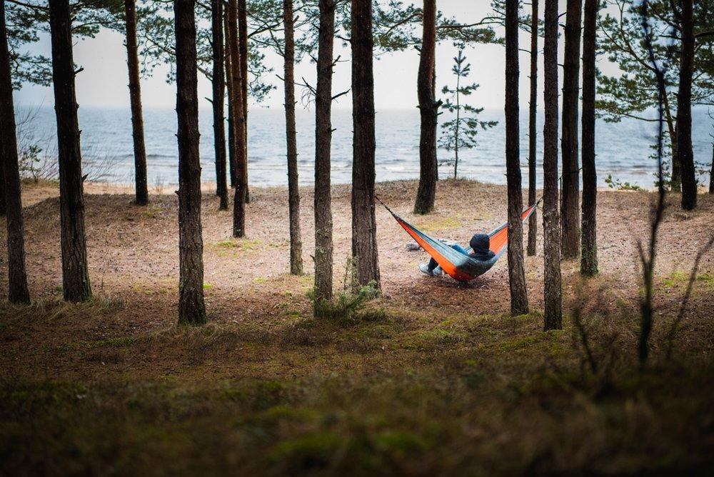 Χαλαρώνοντας στο δάσος, φώτο από Independent Wolf