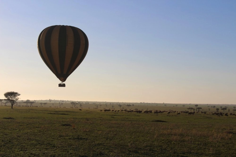 A balloon flying over migrating animals