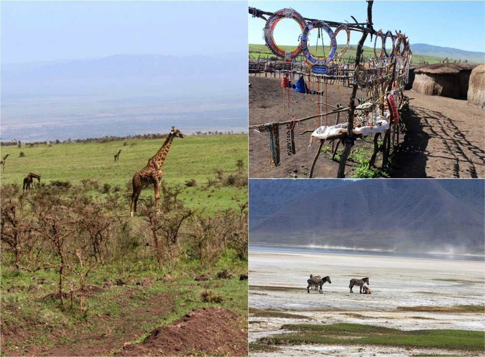 The Maasai handcrafts and the African herbivores
