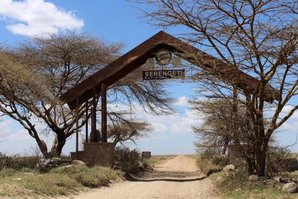Μπαίνοντας στο Εθνικό πάρκο Serengeti στην Τανζανία