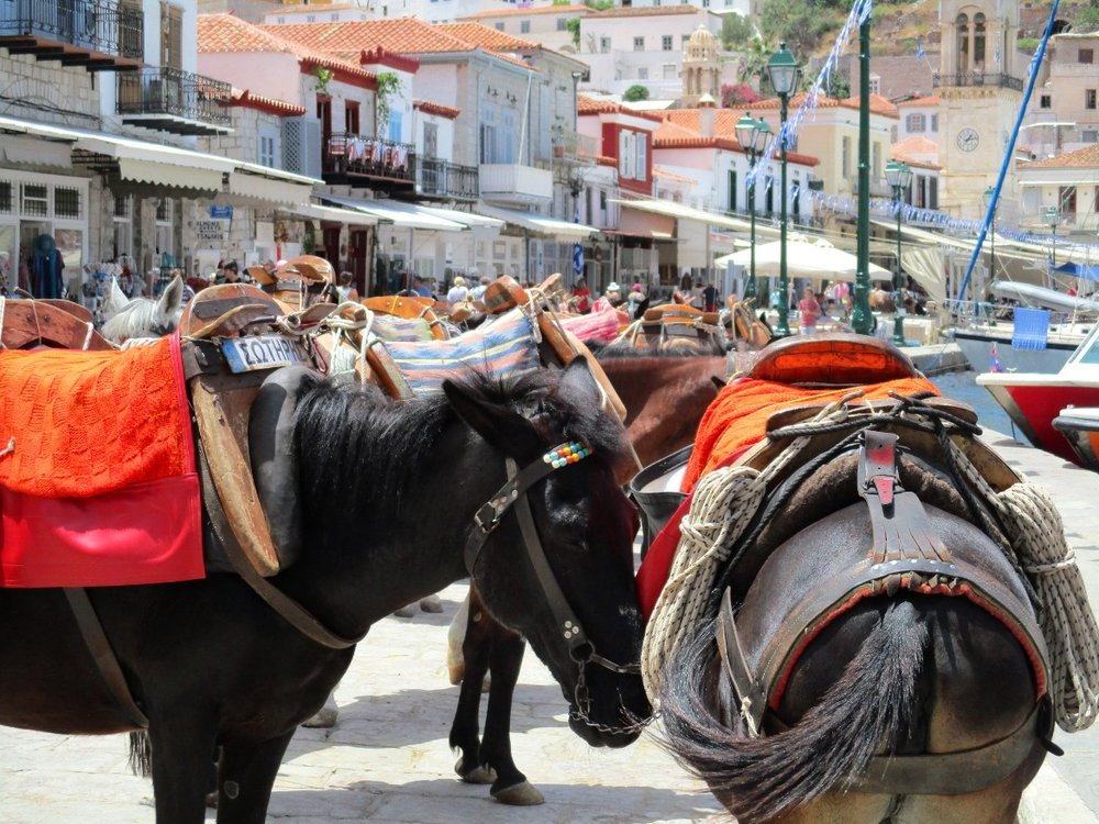 Donkeys and mules waiting at Hydra's harbor