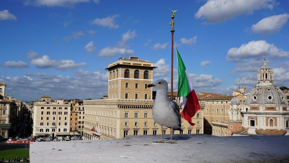 A seagull on top of 'Il Vittoriano' terrace. Source: Truevoyagers