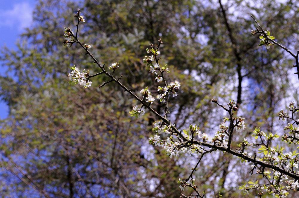 0fc61-blossomblossom.jpg