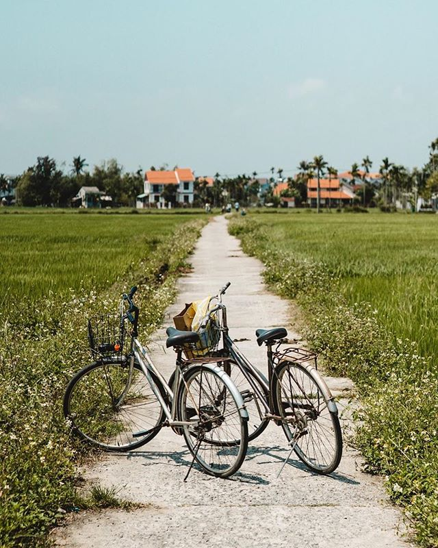 Hoi An may be known for its old town (and rightly so!), but its magic extends far beyond its yellow city walls. While one side is bordered by rivers that lead into the ocean, the other side is covered by the most vibrant green blanket of rice fields. These rice fields are criss-crossed by little walkways that lead into local neighborhoods. Rent bikes (available at most homestays - sometimes for free!) and explore at your own pace, stopping to wave back to the children you meet along the way 🌱 📷 by @ShelbyAlisha #DiscoverVietnam #ShareTheWorldUA