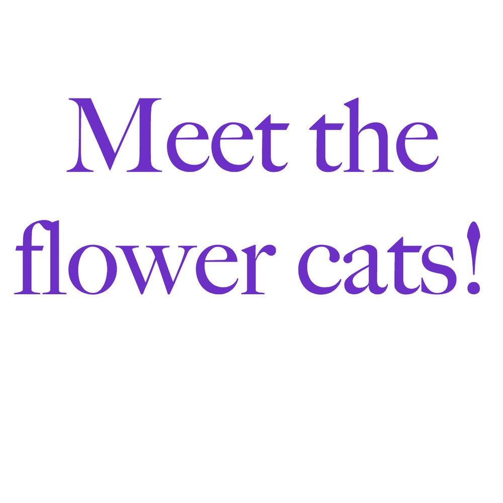 meet the flower cats.jpg