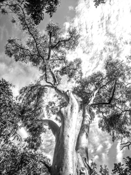 Photographie par    Elise Moga   ,  Nossa National Park