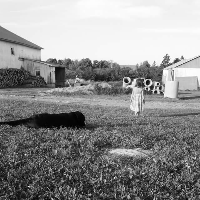 Poule de ville - Agrimom - Vie à la ferme