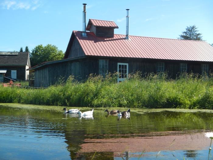 Les canards de la ferme