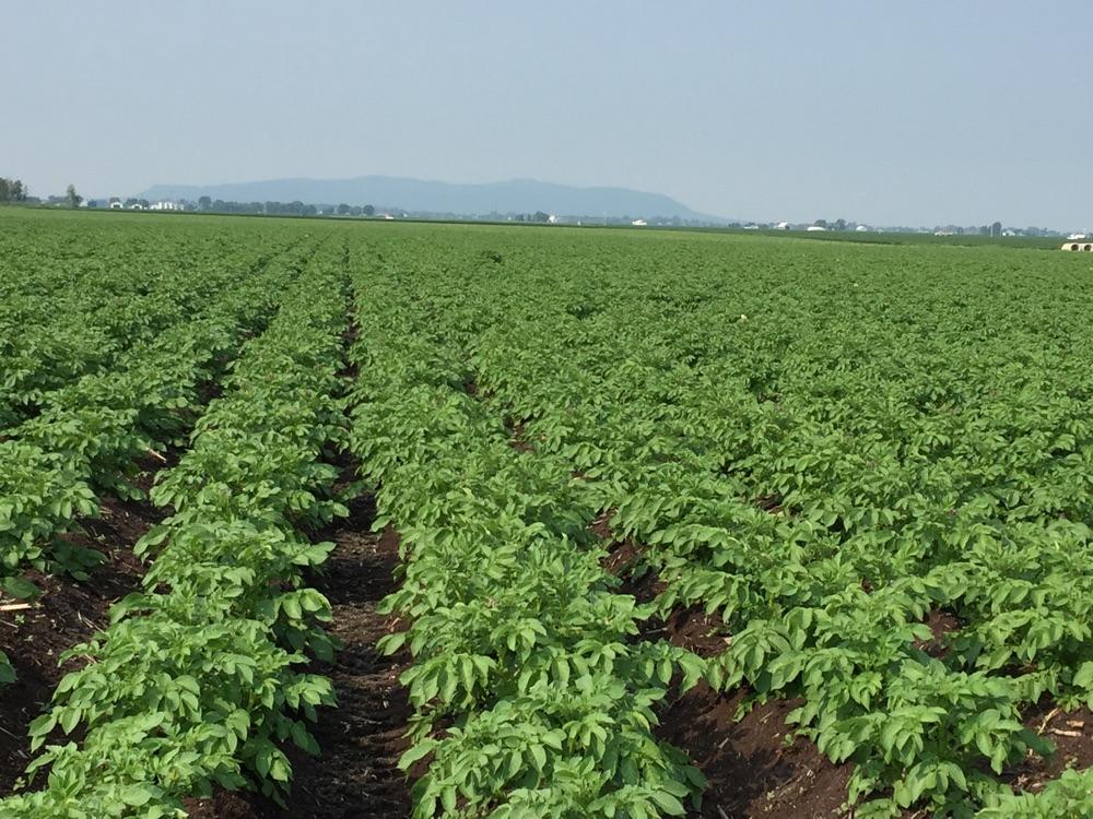 La conception de l'agriculture - #Agrimom