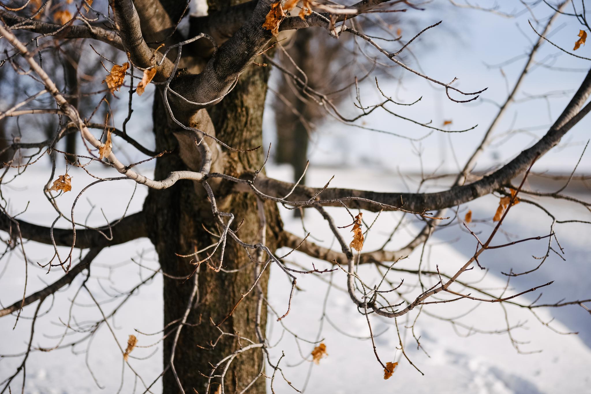 L'hiver, la plus douce des saisons - Agrimom