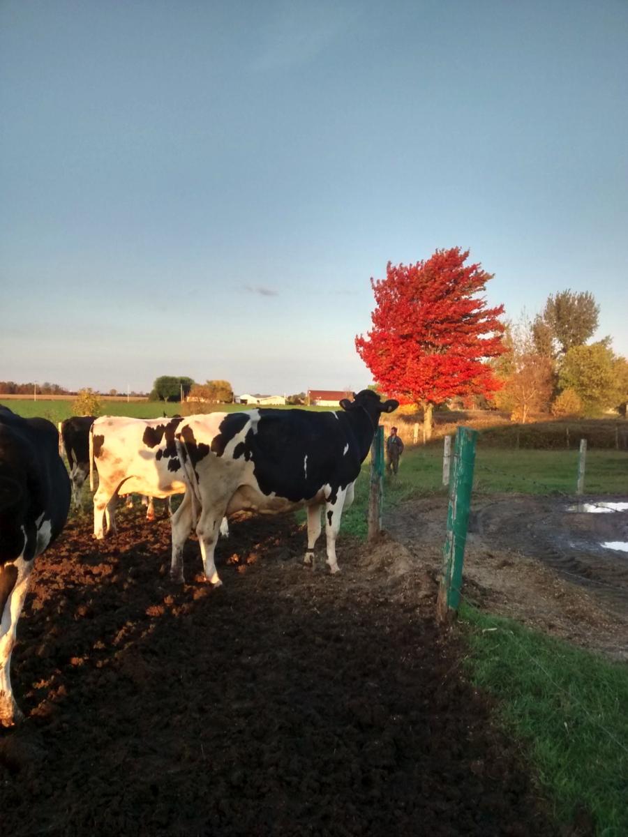 À vous conjointes d'agriculteurs - Agrimom