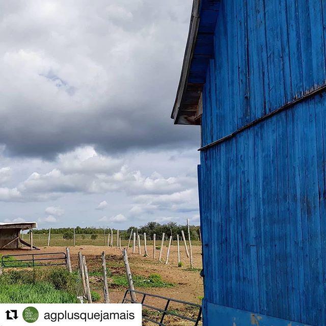 C'est beau la campagne 💙💚 . . #Repost @agplusquejamais with @get_repost ・・・ La #VieÀLaFerme : des occasions d'apprécier la beauté de son milieu à chaque jour! 📷 : @ferme_natibo ・・・ Parfois, les différentes couleurs me sautent aux yeux et je trouve ça tellement beau😁 / Sometimes, colors just pop up and it's just beautiful 😁 #farmlife #ferme #colors #agplusquejamais #oldbarn #blue