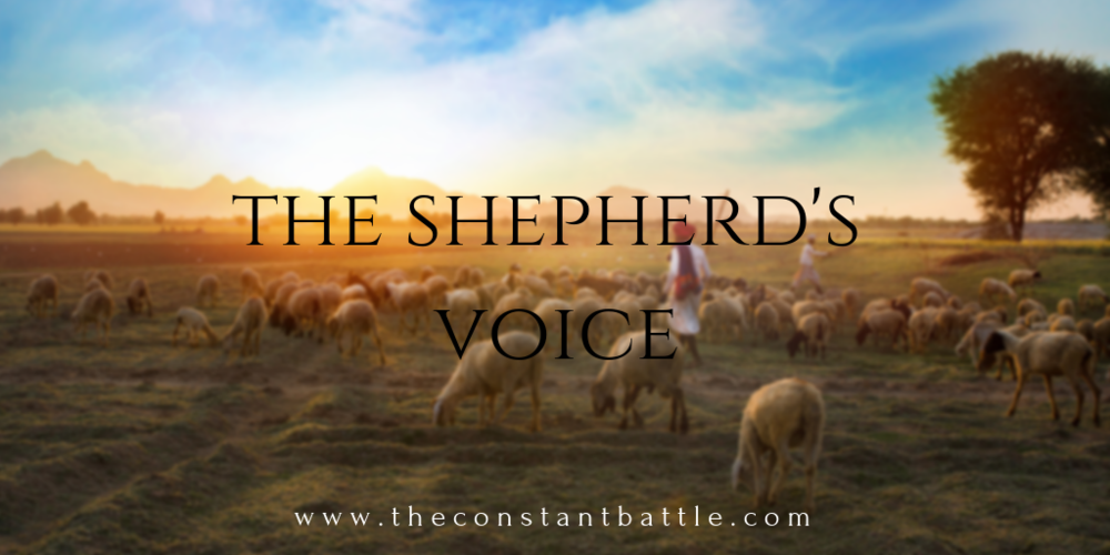 shepherd's voice.png