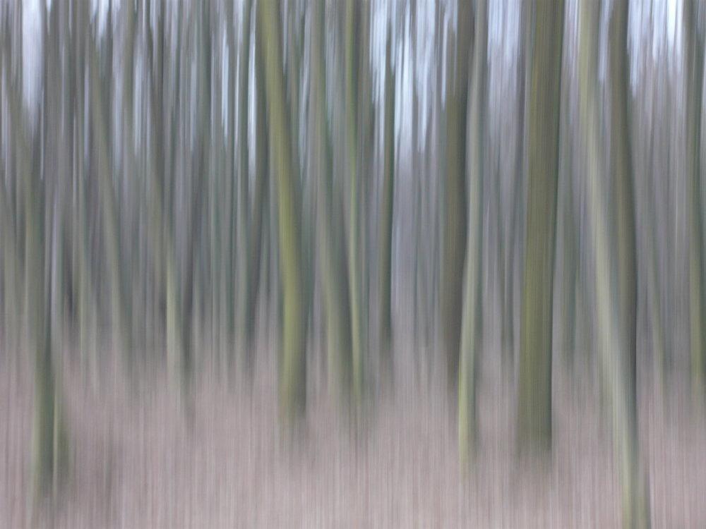 Shifting Woods (C) Johannes Ortner