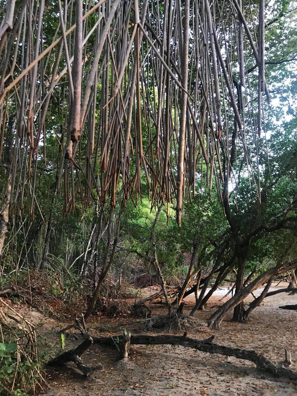 Mangrove Playground